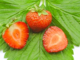 Polka Hz - Erdbeere